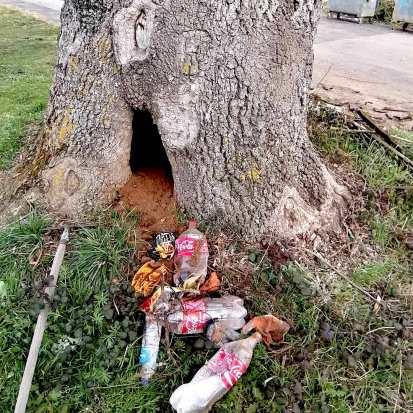Photo: Jodie Harburt (Tree Rescue)