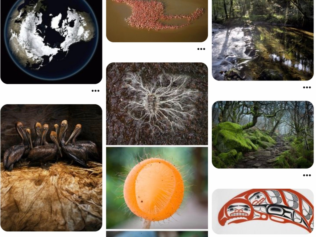 Earth, ecology, climate image collections.